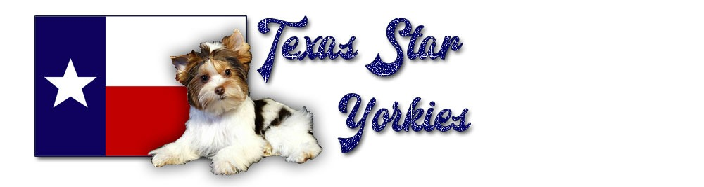 Texas Star Yorkies